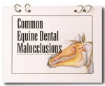 Booklet: Common Equine Dental Malocclusions